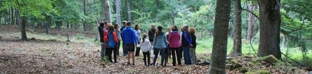 Grupo de trabajo consciente junto al bosque, encuentros Consciencia Arbórea