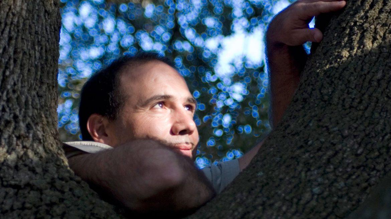 conexión con los árboles Maestros